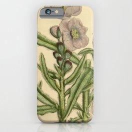 Flower 869 meconopsis prattii iPhone Case