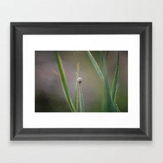 Taking it Slow Framed Art Print