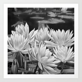 Water Lily in Black and White Art Print
