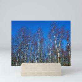 Silver birch in winter Mini Art Print