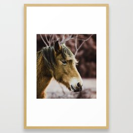 Horse Head Framed Art Print
