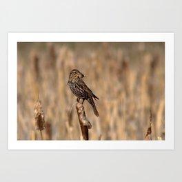 Bird and Snail Art Print