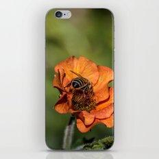 Bee Butt iPhone & iPod Skin