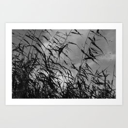 Reed in Wind and Water Art Print