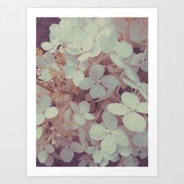 White Flower Bush Art Print