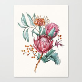 King protea flowers watercolor illustration Canvas Print