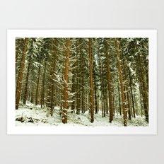 snowy firs Art Print