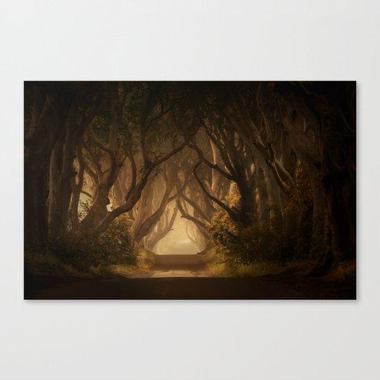 Sunny morning at Dark Hedges Canvas Print