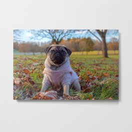 Dog by Ashleigh Robertson Metal Print