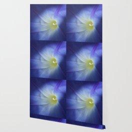 shy striving blue macro flower Wallpaper