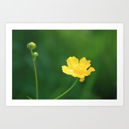 Swamp Buttercup Wildflower Art Print