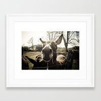 donkey Framed Art Prints featuring Donkey by monsieur m