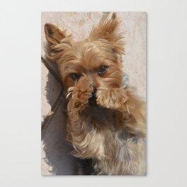 Put Em' Up - The Yorkie Dog Canvas Print