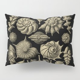 """Thalamorpha"" from ""Art Forms of Nature"" by Ernst Haeckel Pillow Sham"