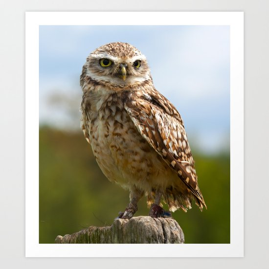 The Burrowing Owl Art Print
