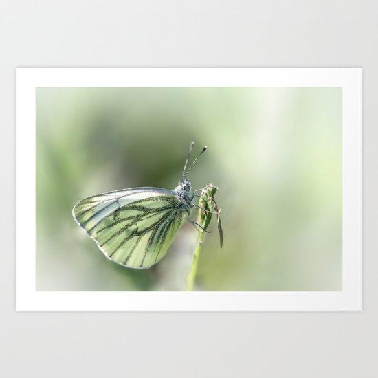 Green-veined White Art Print