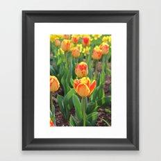 First Sign Of Spring Framed Art Print