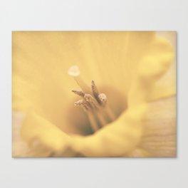Daffodil Heart Canvas Print