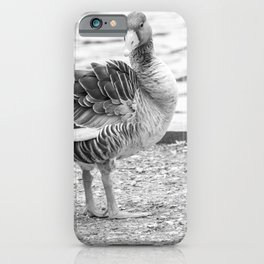 Greylag goose on the bank of the Bure, Wroxham iPhone Case