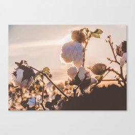 Cotton Field 15 Canvas Print