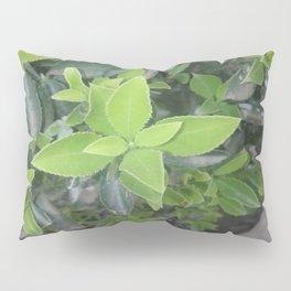 Pretty green. Pillow Sham