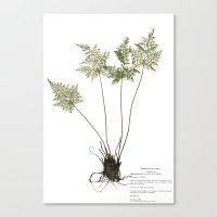 lady gaga Canvas Prints featuring Gaga germanotta by Duke Herbarium