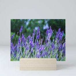 Vibrant Lavender Meadow Mini Art Print