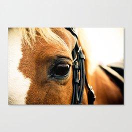 a horse's kind eyes. Canvas Print