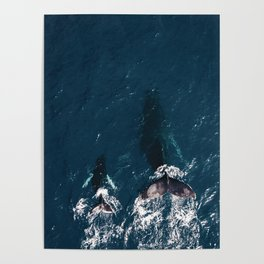 Ocean Family Whales Poster