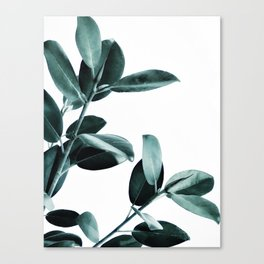 Natural obsession Canvas Print