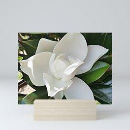 Magnolia 3 Mini Art Print