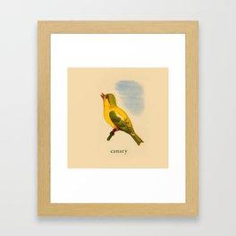 Cute Canary Painting Framed Art Print