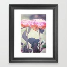 Pink Peony 14 Framed Art Print