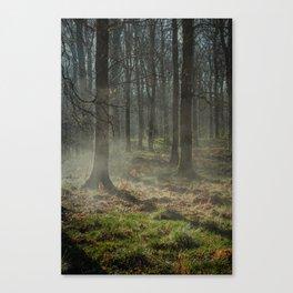 Misty Beech  Canvas Print