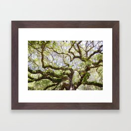 Angel Oak Tree Framed Art Print
