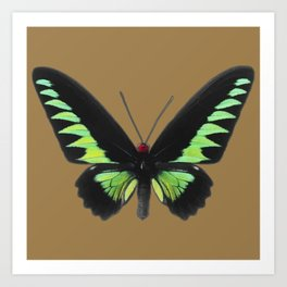 Rajah Brooke Birdwing Art Print