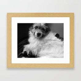 'Pebbles' Jack Russell Framed Art Print