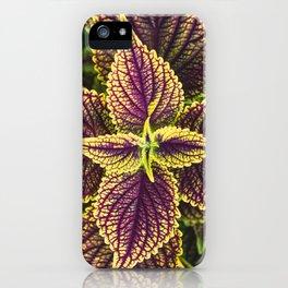 Plant Patterns - Coleus Colors iPhone Case