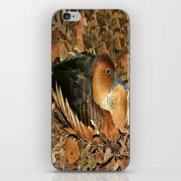 Fulvous Whistling Duck iPhone Skin