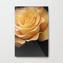 Lady Rowena- Golden Rose  Metal Print