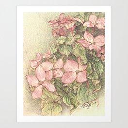 Satomi Dogwood, Pencil Sketch II Art Print