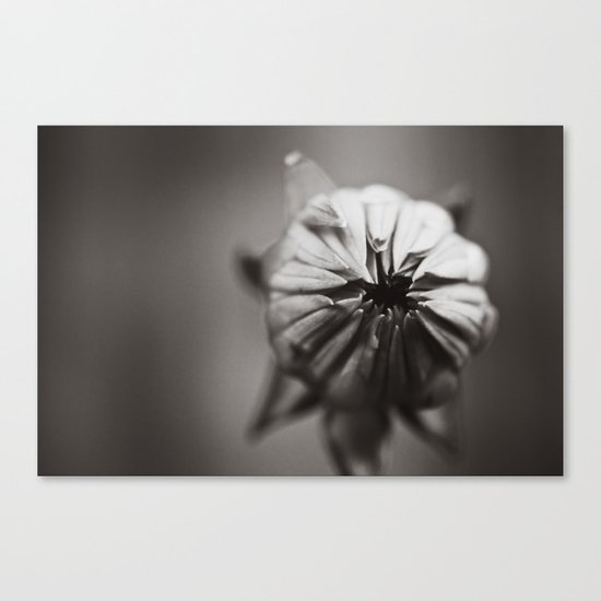 Ready to Bloom Canvas Print