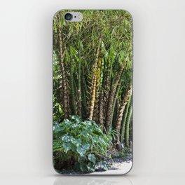 Palm Grove iPhone Skin