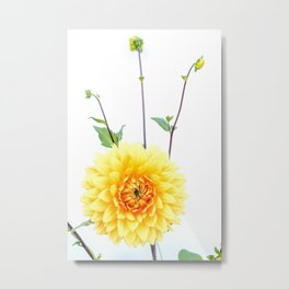 Bursting sunlight dahlia Metal Print