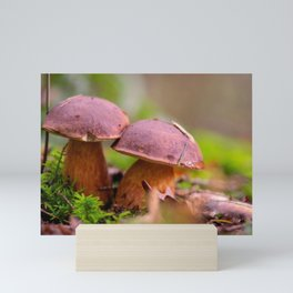 Porcini mushrooms in a double pack Mini Art Print
