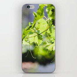 Bulgarian Grapevine #society6 #decor #buyart #kirovair iPhone Skin