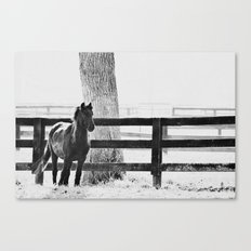 horse by the fence Canvas Print