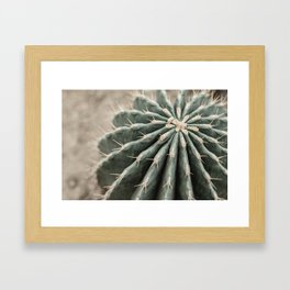 Cactus Dreams | Modern Botanical Photography | Nature Framed Art Print