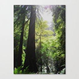Redwoods Light Canvas Print
