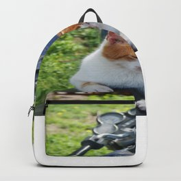 Ginger and White Tabby Cat Sunbathing on A Motorcycle Backpack